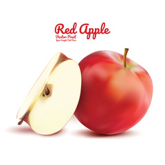 Red apple and cut isolated. fruits vector illustration. Modern style realistic