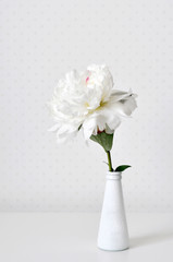 White peony is very gentle and delicate flower