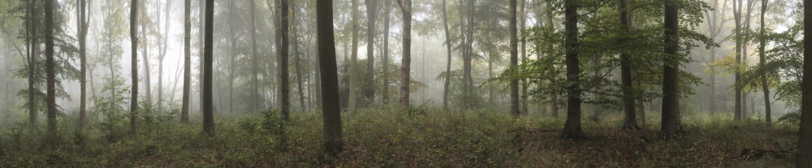 In de dag Bleke violet Panorama landscape image of Wendover Woods on foggy Autumn Morning.