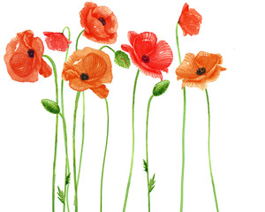 poppy flowers watercolor.