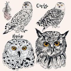 Collection of vector hand drawn owls in detiled style. Hipster fashion design