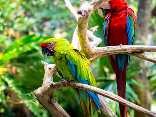 Colorful Macaw Birds