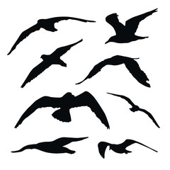 Set of flying seagull silhouettes isolated on white background