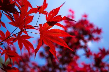 acero rosso con sfondo di cielo blu , Puglia, Italia