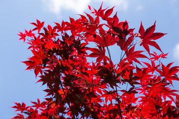 acero rosso su sfondo di cielo azzurro, Puglia , Italia