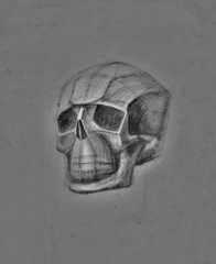 Skull drawn in pencil on gray.  Clear form