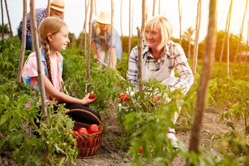 Family farmers working in garden
