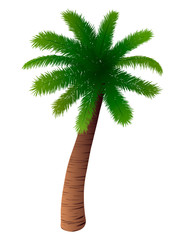 Vector palm tree on white background