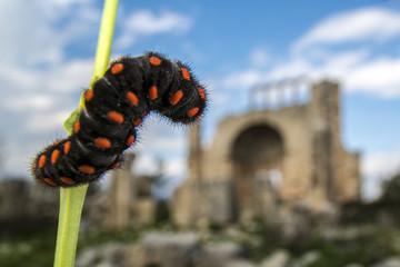 Catterpillar and okuzlu ruins