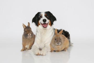 Hund mit Zwergkaninchen