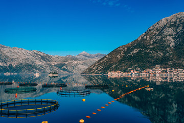 Fishermen in a boat are fishing. Kotor Bay, a view of the city of Perast and the island of Gospa od Skrpela, Montenegro.