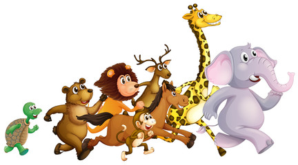 Wild animals running together