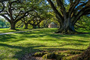 oak alley historic plantation, louisiana