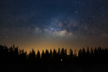 Beautiful milkyway and silhouette of pine tree on a night sky before sunrise