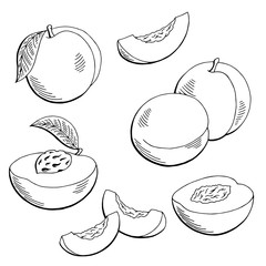 Peach fruit graphic black white isolated sketch illustration vector