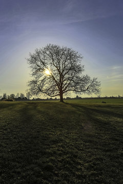 Einzelner Baum im Feld in der untergehenden Sonne