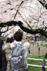 花見 観光客 写真撮影