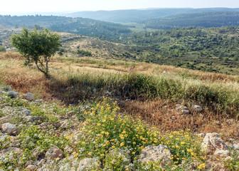 Park Canada near Latrun Monastery, Israel