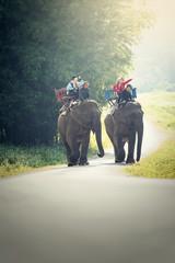 Tourist riding on elephants Trekking
