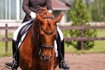 Portrait of chestnut dressage horse during show