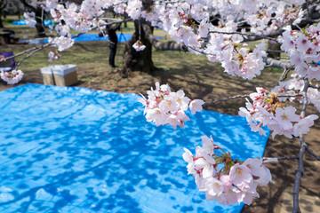 桜・花見・場所取り