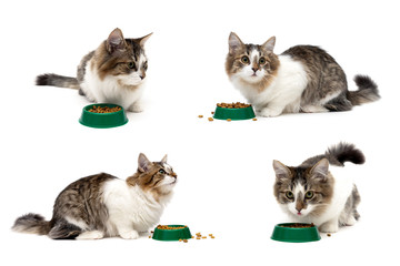 cat sits beside a bowl of food on a white background