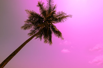 abstract coconut tree in sky with vintage filter - can use to display or montage on product