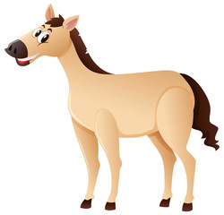 Brown horse standing on white background