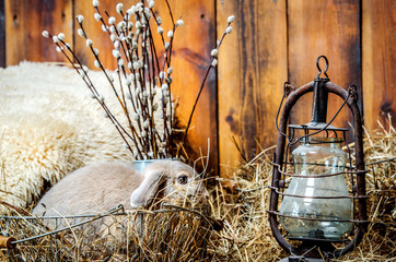A small gray rabbit is sitting in a basket littered with hay. Near the rabbit there is an old lamp, and behind it are branches of willow.