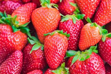 Fototapete - Frische Erdbeeren