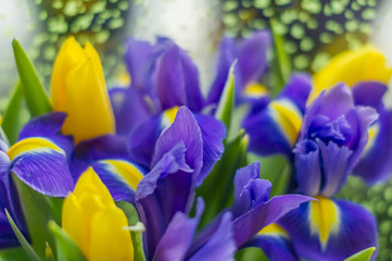 Bouquet of violet iris flowers and yellow tulips