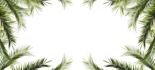 frame of leaves of palms isolated on white background