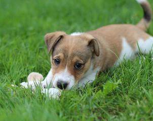 Lächelnder Mischlingshund
