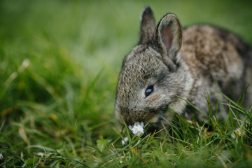 Image of  grey rabbits in green grass outdoor