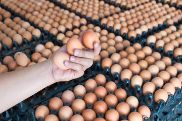 Hand holding eggs from chicken farm on lot of egg in the package background.
