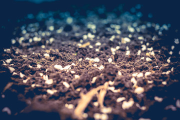 White Petals on Ground Retro