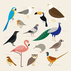various kind birds flat design illustration set