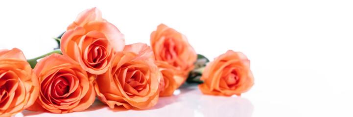 panorama mit strauß rosen