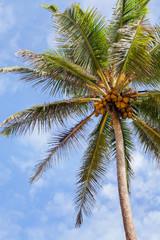 Кокосовая пальма на фоне неба.
