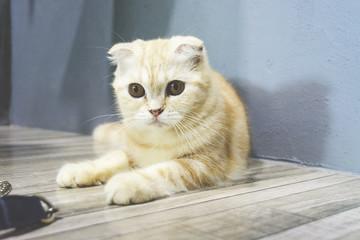 Curious cat in cat cafe