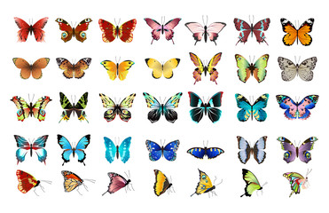 Beautiful colorful butterflies set on white background.