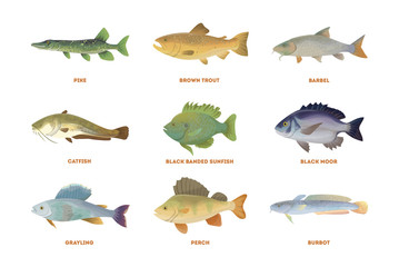 River fish set. Isolated fish on white background.