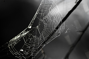 black and white image of a spider web