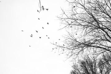 Himmel Bäume Vögel