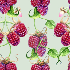 Raspberry and blackberries on a branch. Isolated on white background