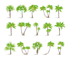 Isolated palms set on white background. Tropic exotic landscape.