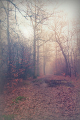 Wall Murals Forest English woodland on a foggy misty morning