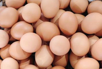 chicken egg background