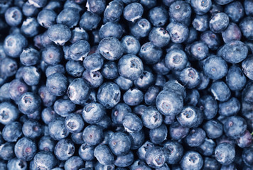 blueberries close up background