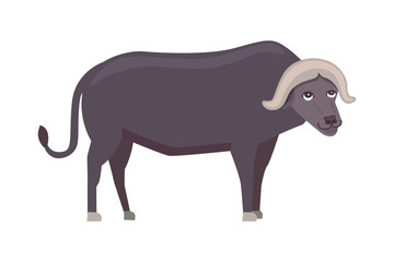 Buffalo cartoon vector illustration isolated